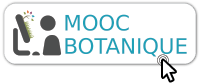 moocbouton
